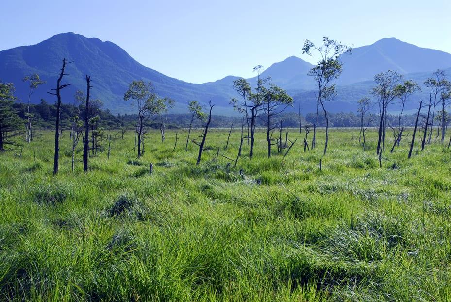 senjogahara marshlands, Nikko, Nikko National Park