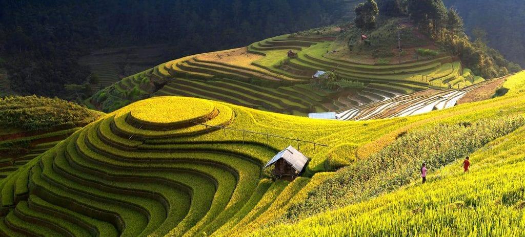 Indonesia Rice Terraces