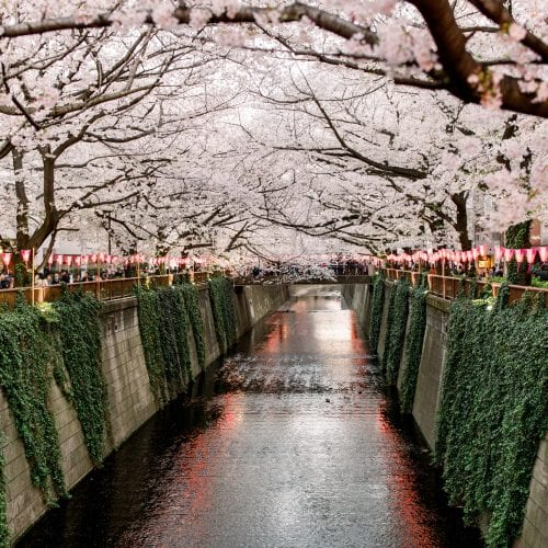 spring blossom tour in japan