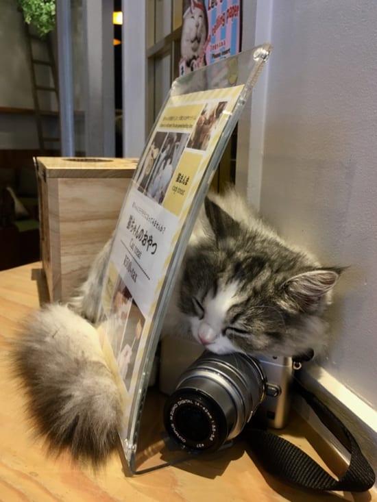 affordable cafes in Tokyo